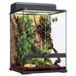 Kit Terrario Tropical Exo Terra 60x45cm
